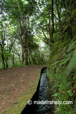Madeira levada
